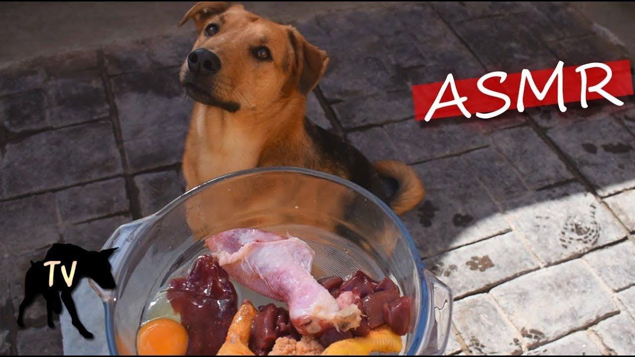 Baja Dog Eating Raw Meat Asmr Eating Raw Dog Eating Eat