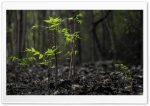 Black Forest Hd Wide Wallpaper For Widescreen Wallpaper Forest