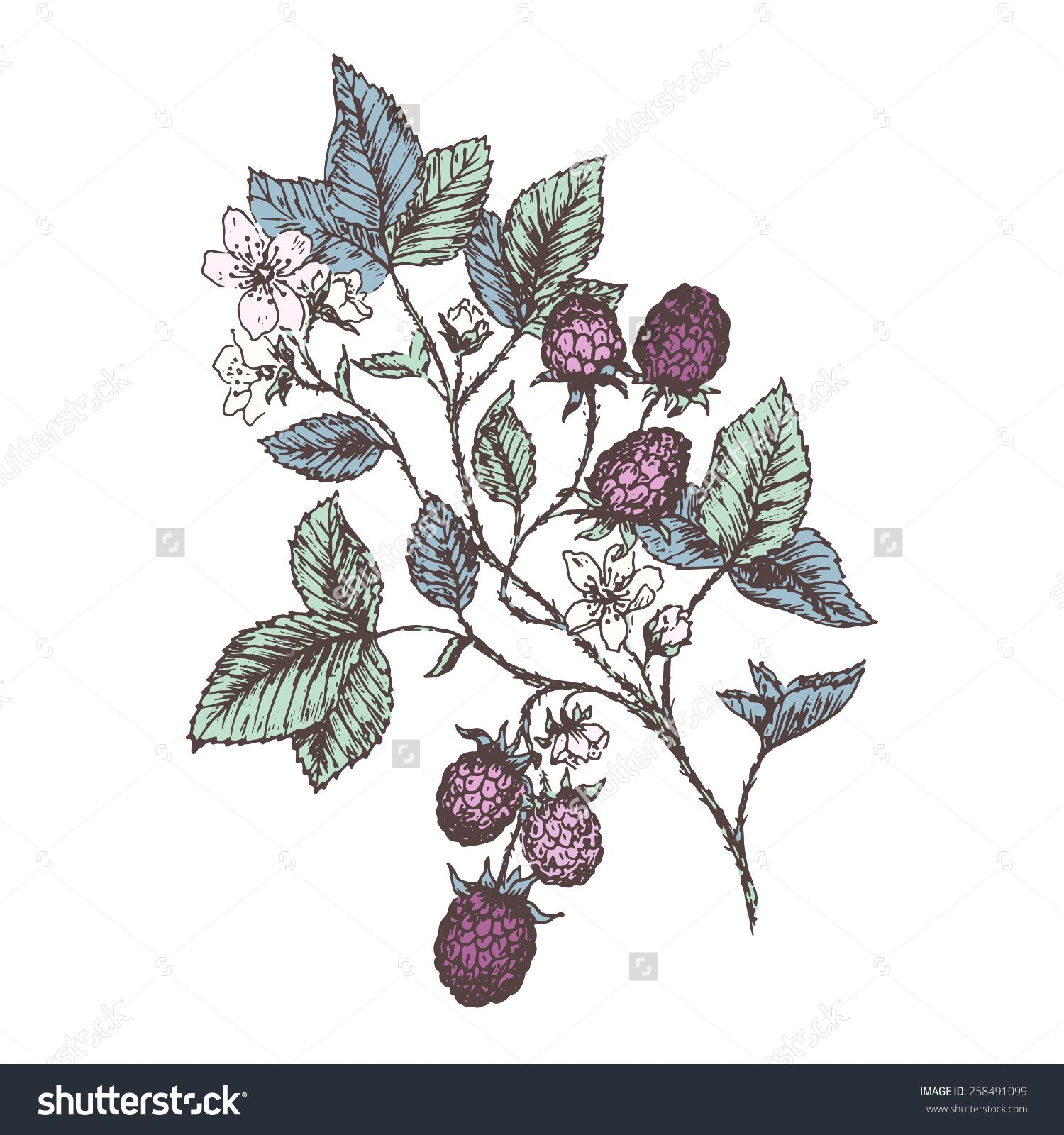 image result for botanical drawing strawberry flower