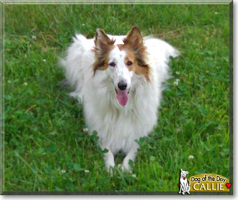 Pin By Dog Of The Day On Collies Collie Rough Collie Dogs