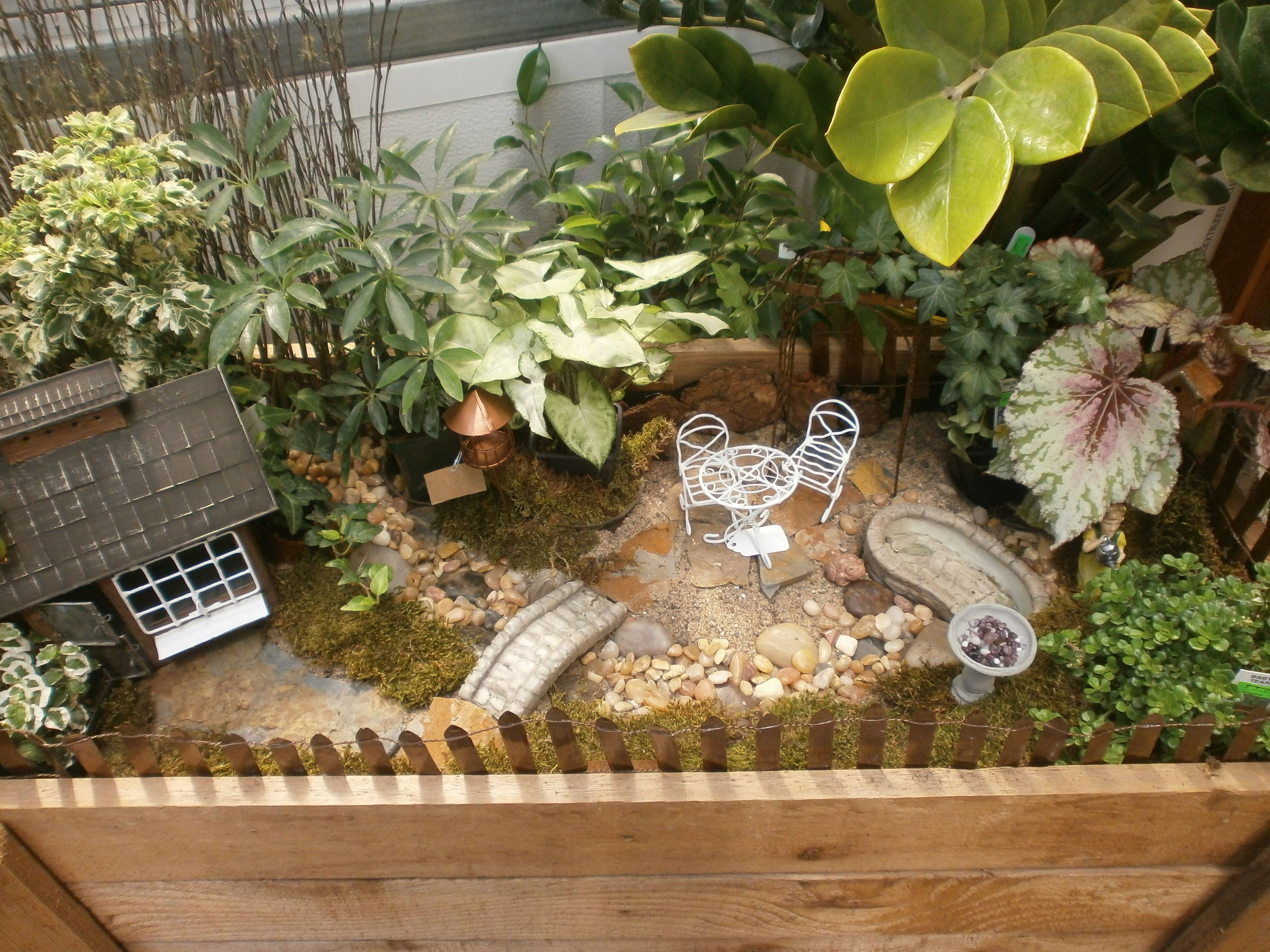 Miniature Gardening | Sargent\'s Nursery | Miniagure Gardens ...