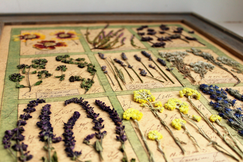 Handmade item Dried flowers in oak frame. Herbarium, Pressed flowers ...