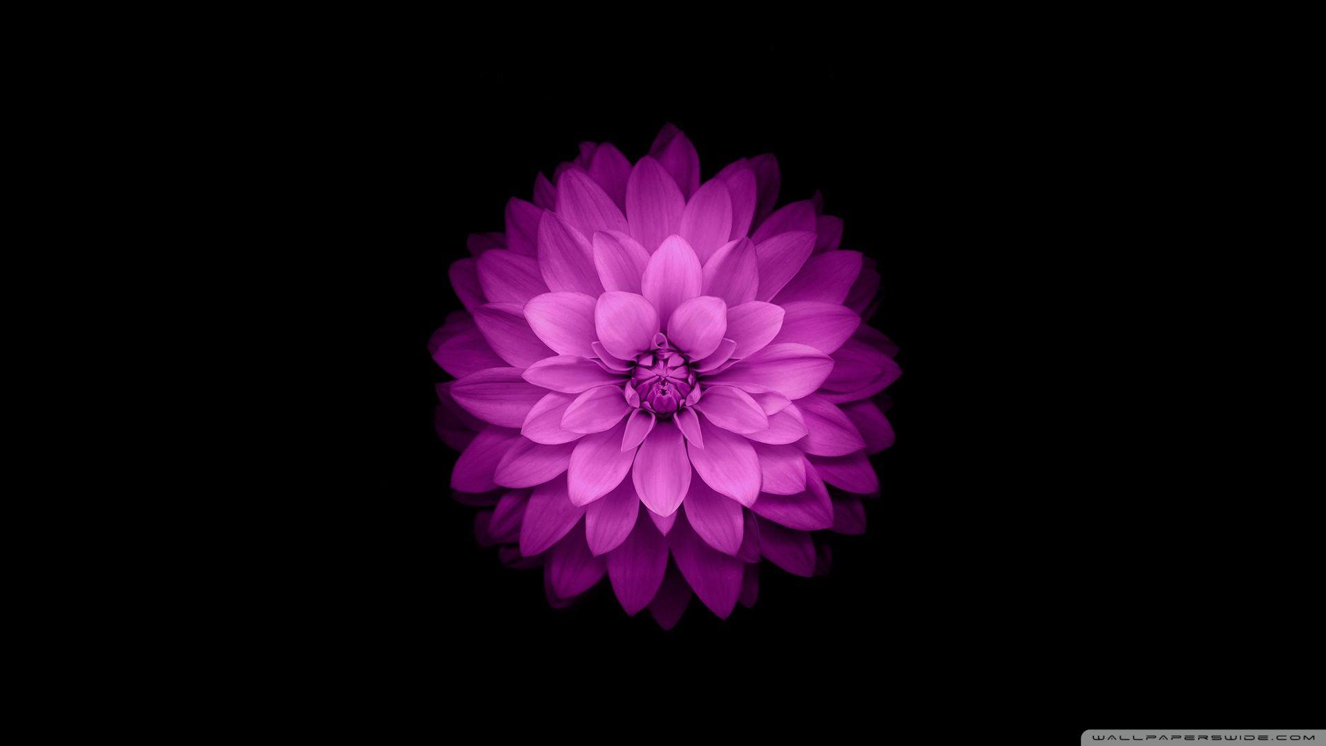 Pin By One Heart Soul On Wallpaper Flower Iphone Wallpaper
