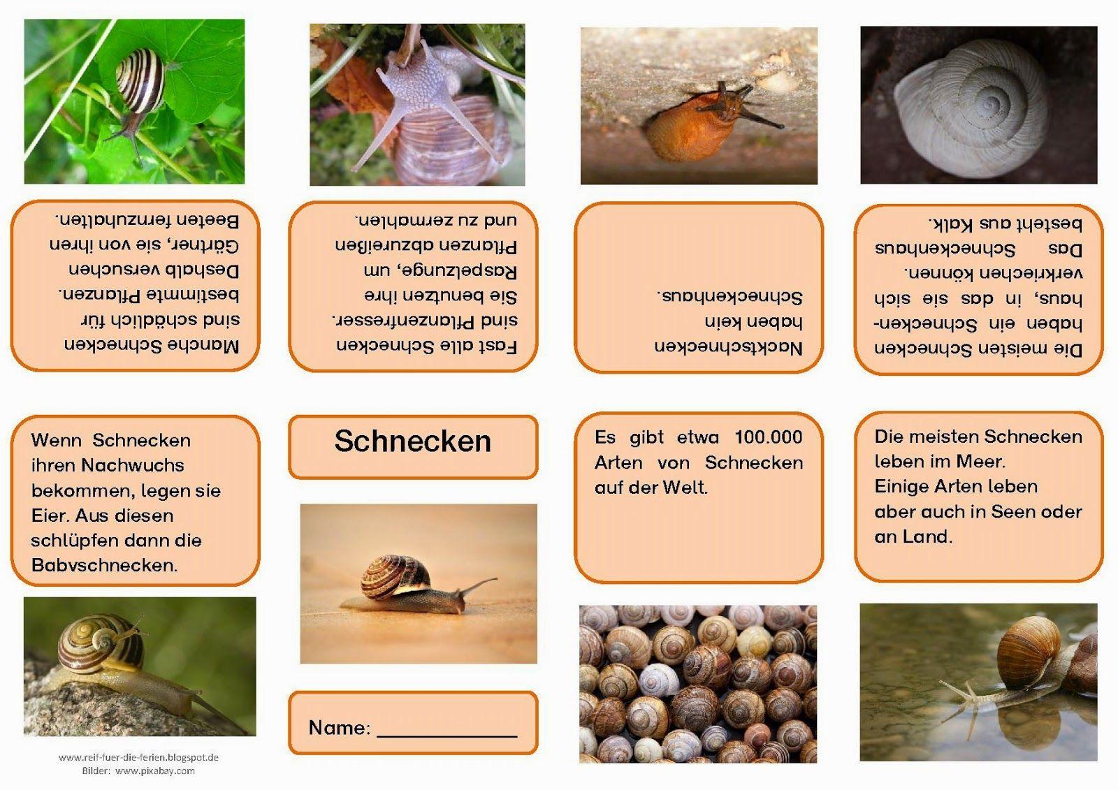 schnecken faltb chlein schule pinterest kindergarten montessori and school. Black Bedroom Furniture Sets. Home Design Ideas