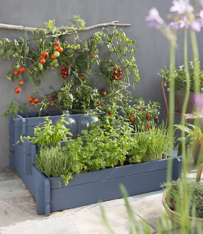 Potager escalier Pieds de tomates suspendus