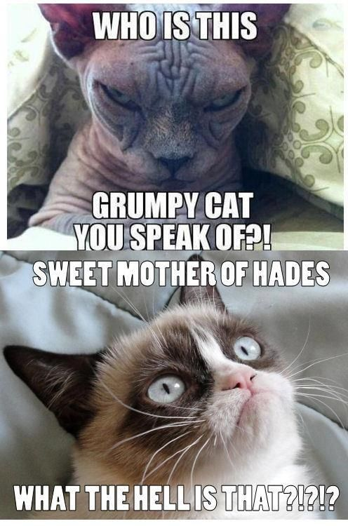 Hairless Cat Vs Grumpy Cat One Of My Favorite Grumpy Cat Memes