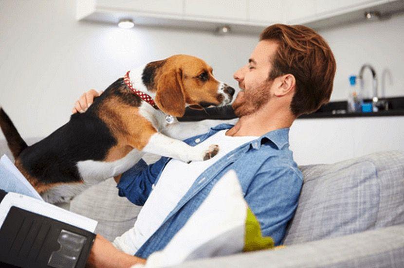 MiiDeals Brings You the Best Pet Deals in Dallas http