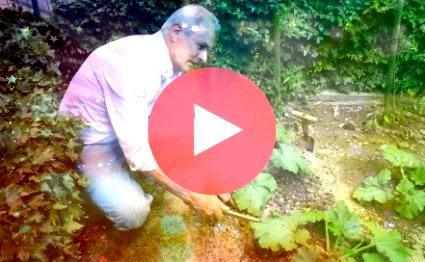 Vegetable Gardens Florida fall vegetable gardens share much in common with gardens in other states Although many people think of Florida as a warm or hot state yearround...