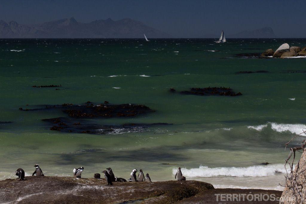 Os pinguins também curtem a paisagem em False Bay