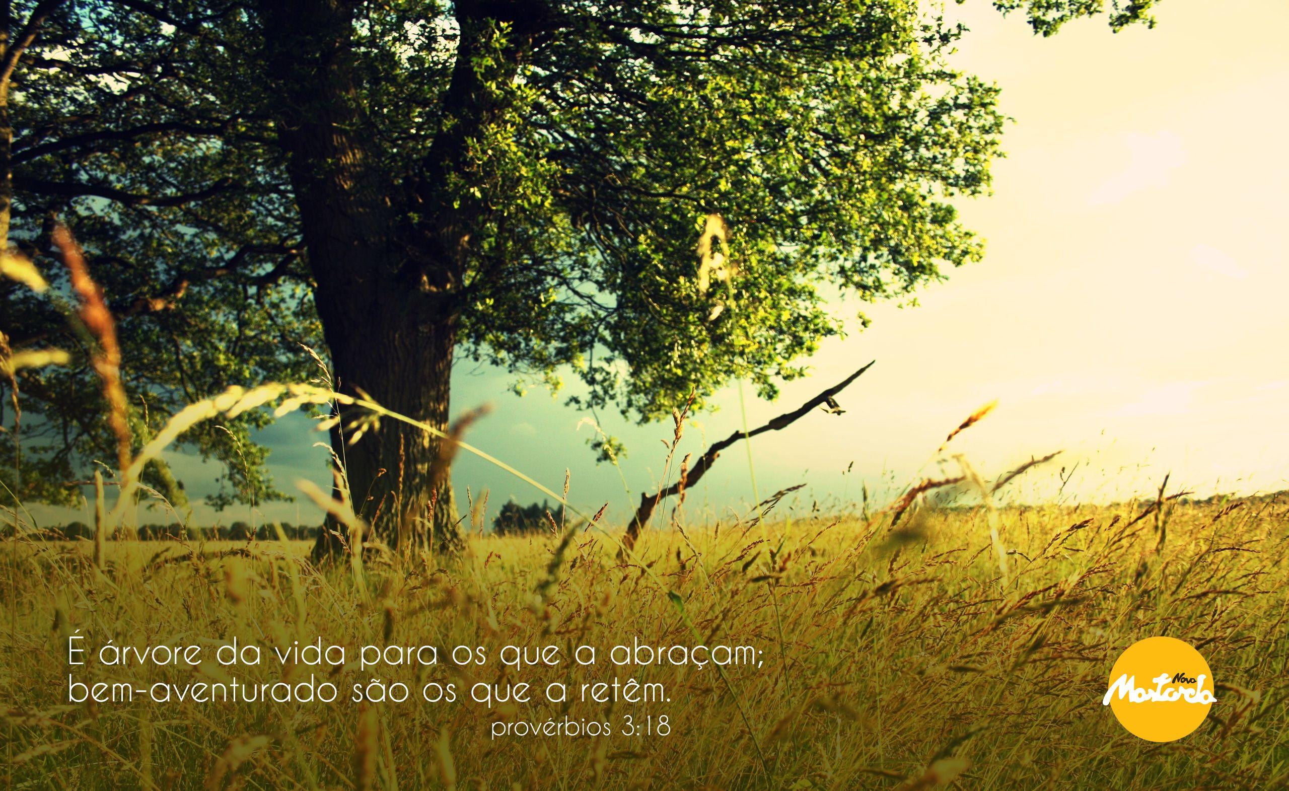 Provérbios 3:18