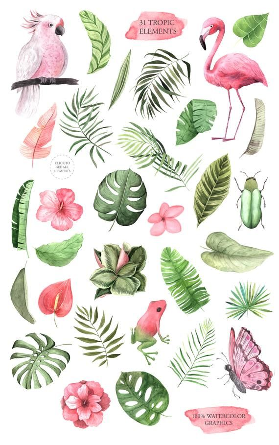 Watercolor Tropical Flowers Clipart. Flamingo, parrot, monstera, hibiscus for instant download. Wedd