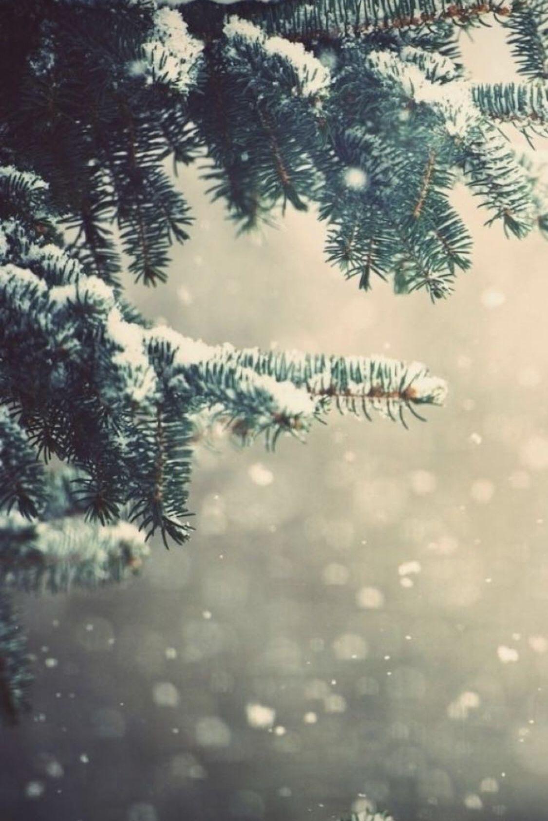 Follow @LittleMissPerfect for more ❤️ Insta: Lil.Loca.Lil #winterbackground