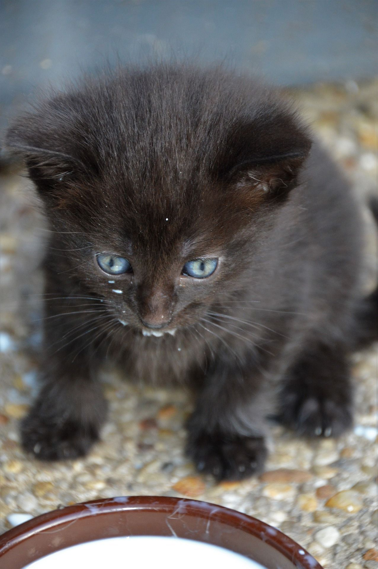 Pin On Cutest Cats And Kittens