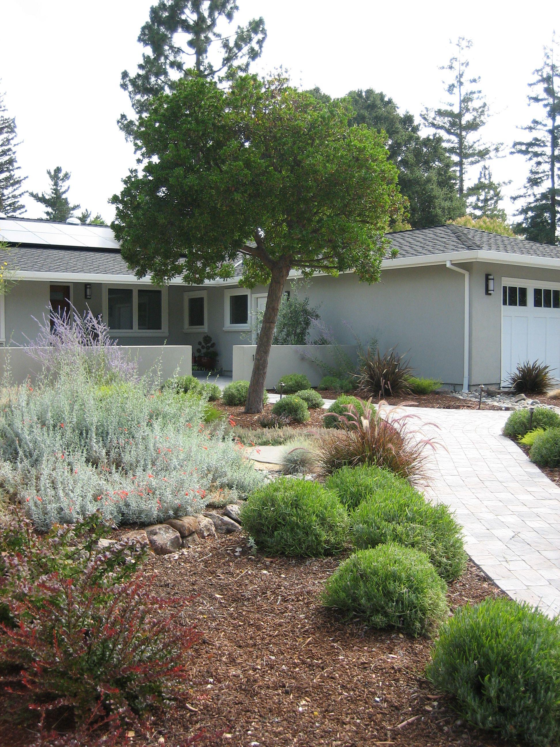 Dorable Olive Garden Palo Alto Ornament  Beautiful Garden