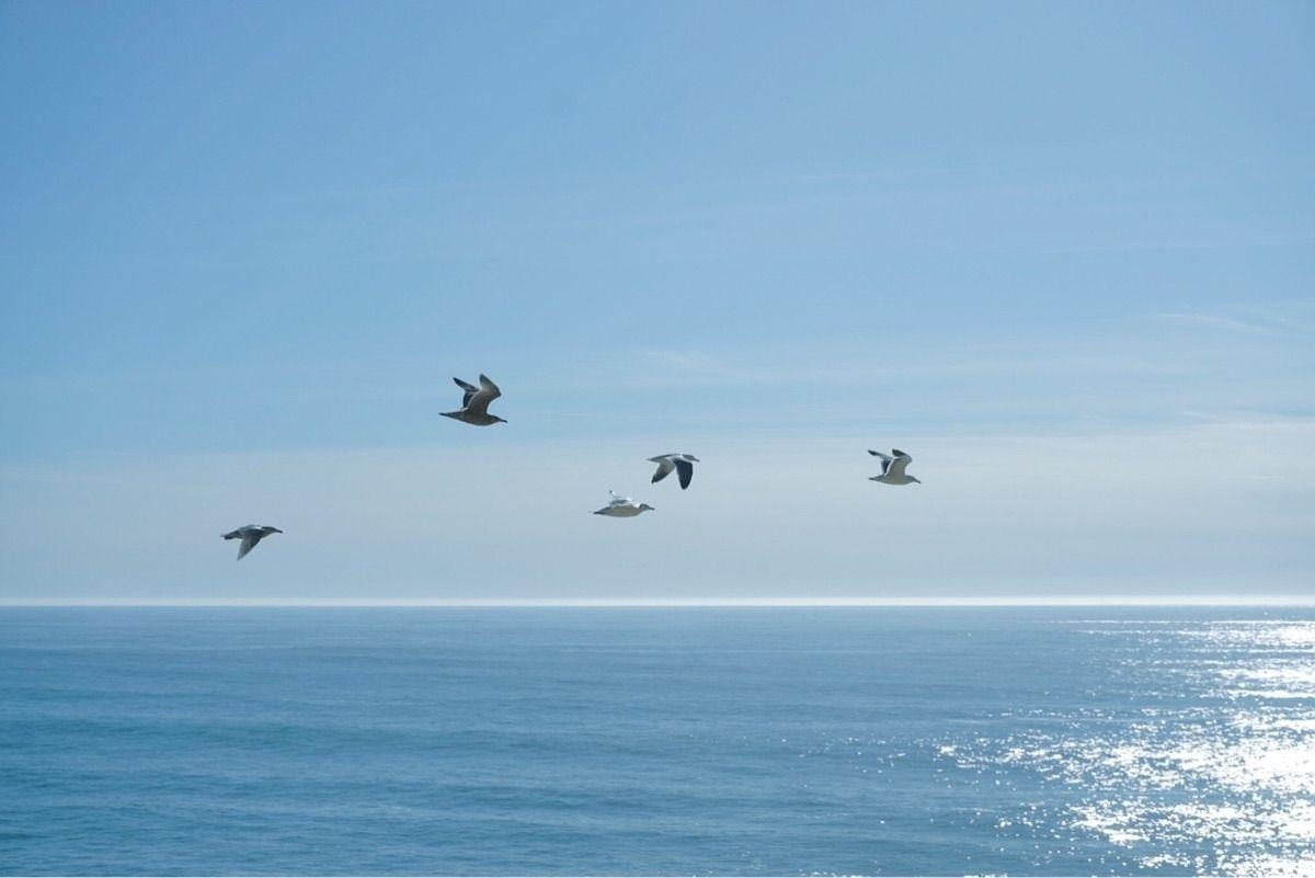 #sea #birds