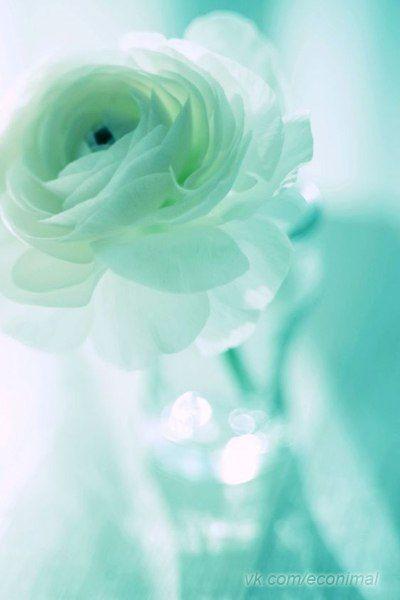 Цветы и экология