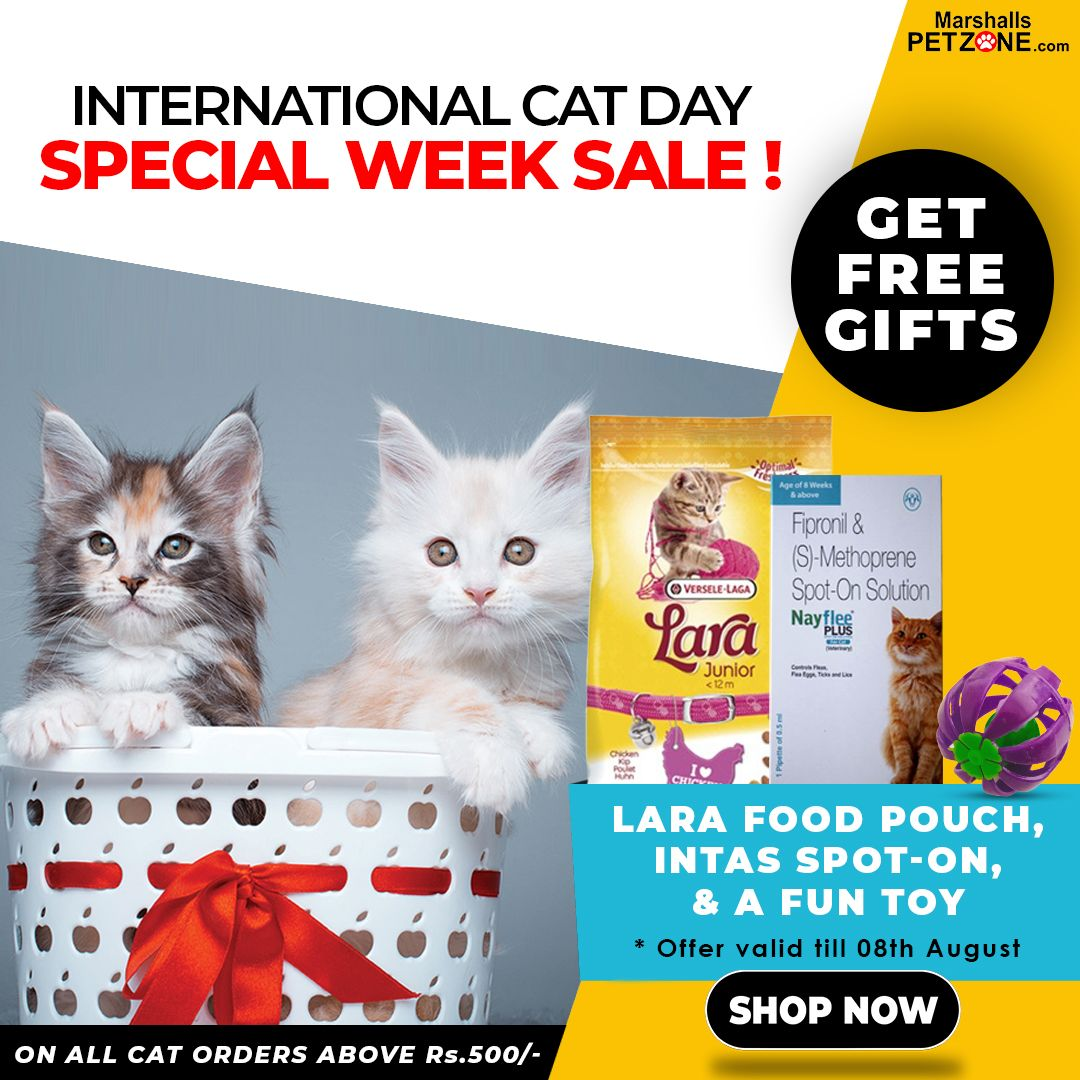 Free Gifts On Any Cat Products Above Rs 500 International Cat Day Buy A Cat Cat Day