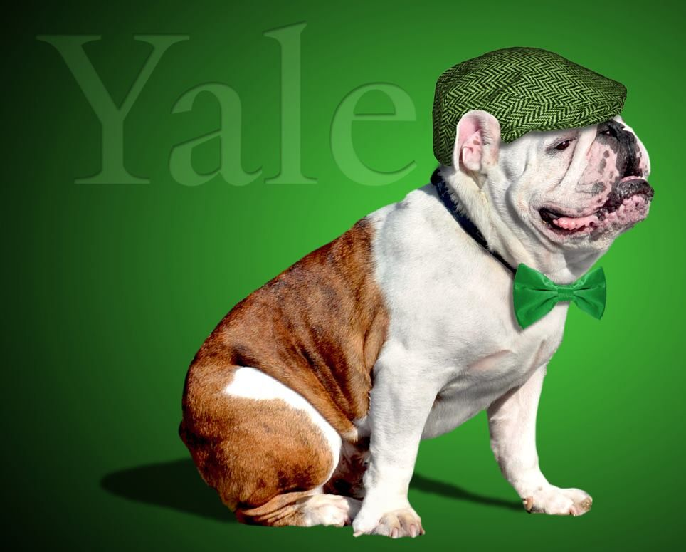 Happy St Patrick S Day From Handsome Dan Bulldogs French
