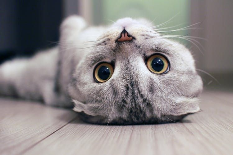 Pin Na Doske Cats