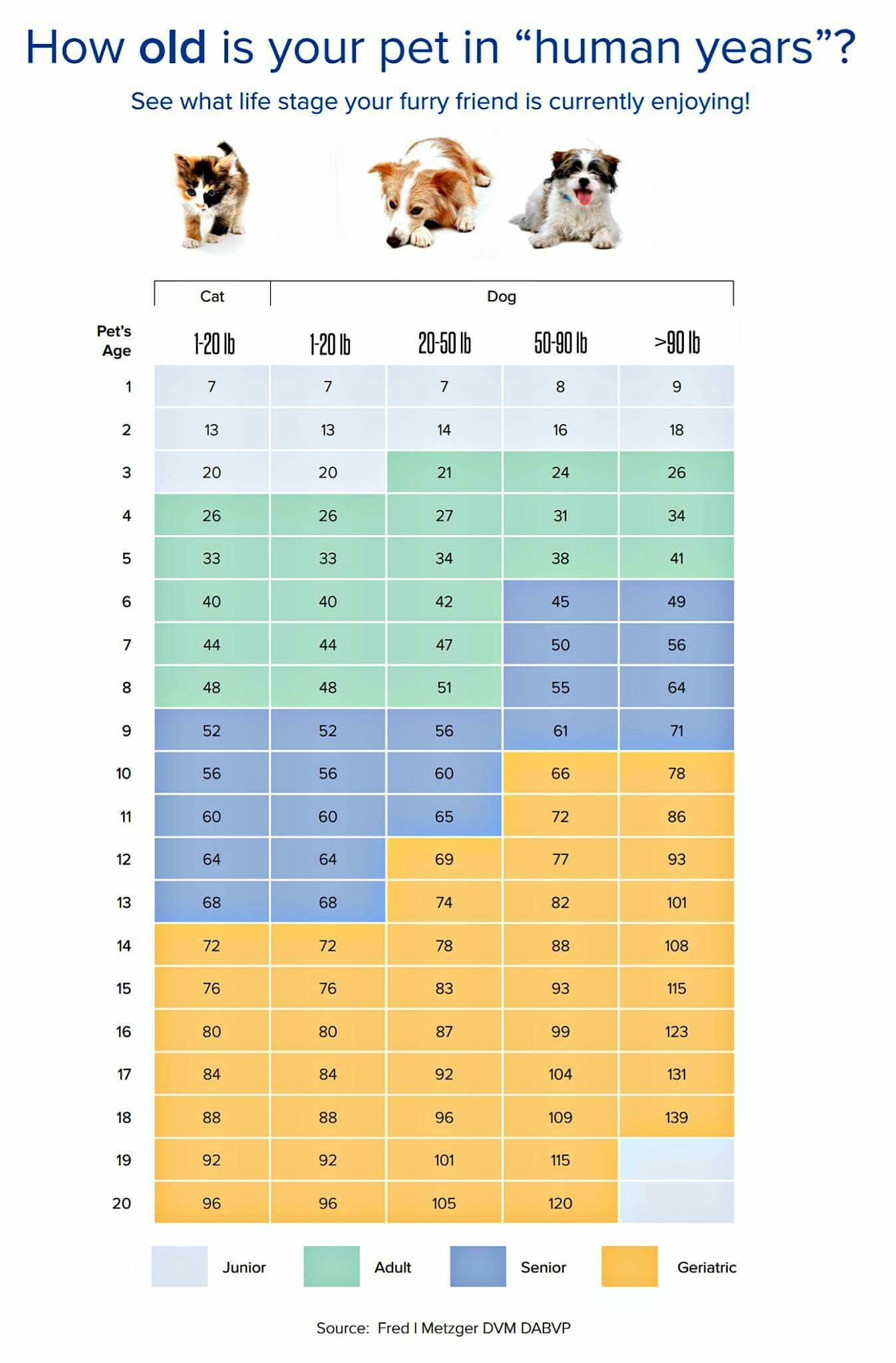 How Old Is Your Pet In Human Years Dog Years Chart Dog Breath Dog Accesories