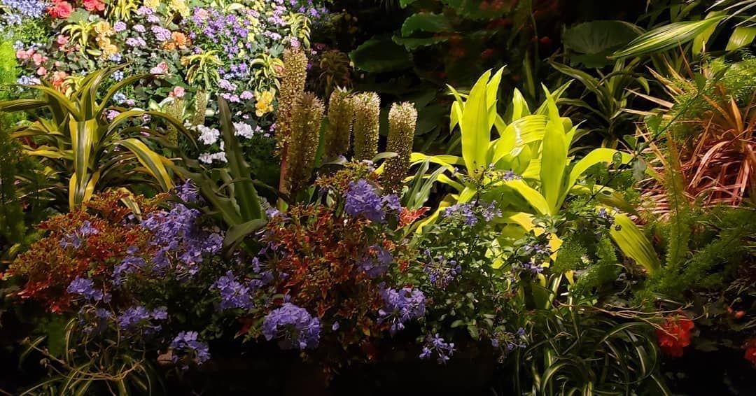 Night Illumination at Butchart Gardens.  #westcoastlife #westcoast #bc #britishcolumbia #victoria #victoriabc #vancouverisland #flowers #blooms #garden #butchartgardens #butchartgardens Night Illumination at Butchart Gardens.  #westcoastlife #westcoast #bc #britishcolumbia #victoria #victoriabc #vancouverisland #flowers #blooms #garden #butchartgardens #butchartgardens