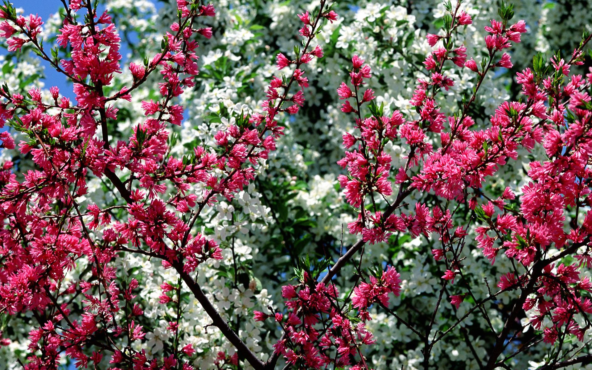 spring in flower desktop pc and mac wallpaper