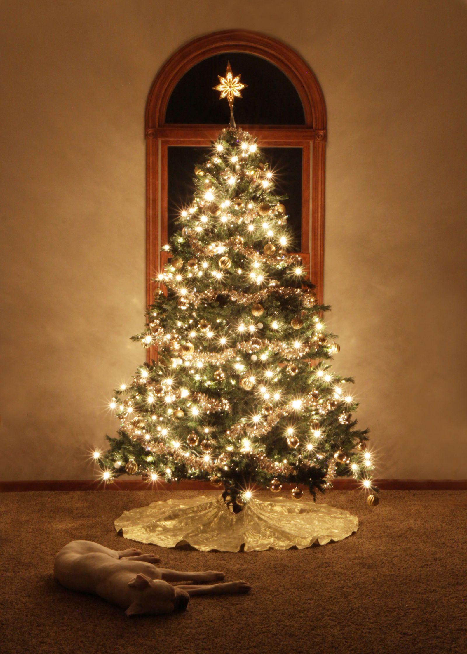 Design Debate White Lights Vs Colored Lights Colored Christmas