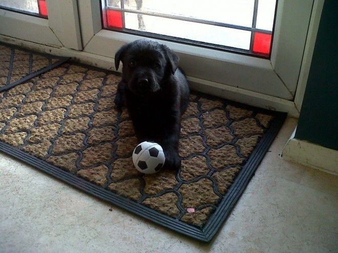 Border Collie Puppies For Sale Birmingham West Midlands