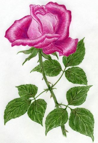 How To Draw A Rose Very Easy And Simple Roses Drawing Flower Drawing Rose Drawing