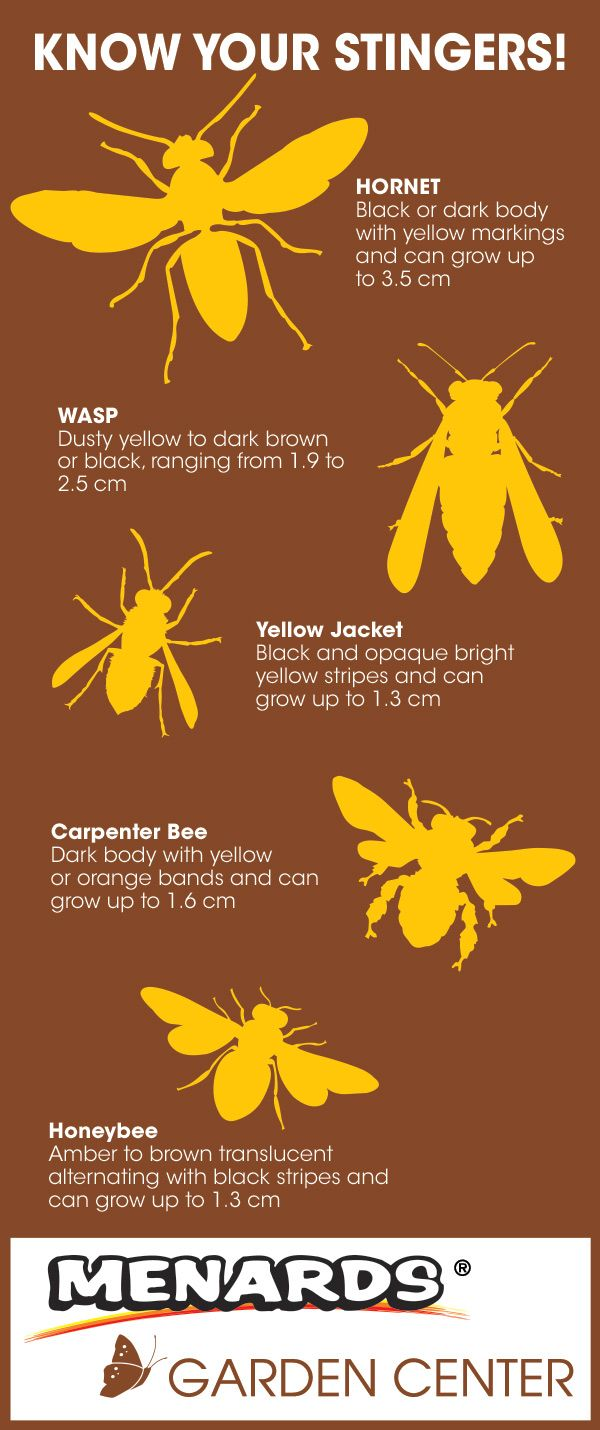 Know your stingers! Read full article: http://www.menards.com/main/c ...
