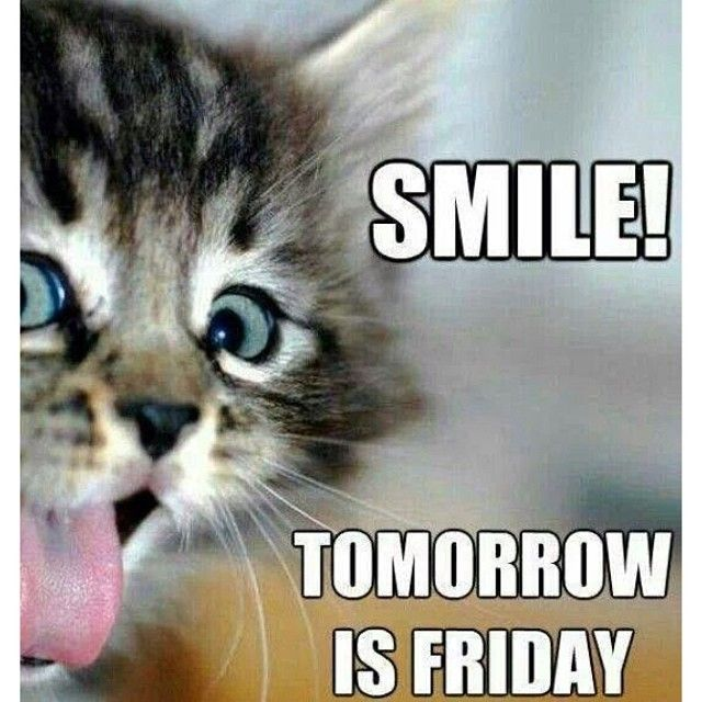 Good Morning Thursday Cats Tomorrow Is Friday Its Friday Quotes Friday Humor