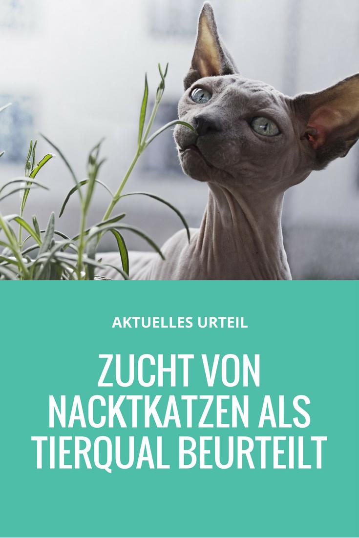 Sphynx Katzen Züchter Gericht verbietet weitere Vermehrung