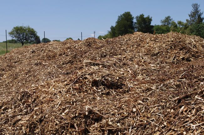 Brands Tree Felling Premium Supplier Of Mulch In Johannesburg Protects And Enriches The Soil Http Www Brandstreefellin Tree Felling Best Sites Amazing