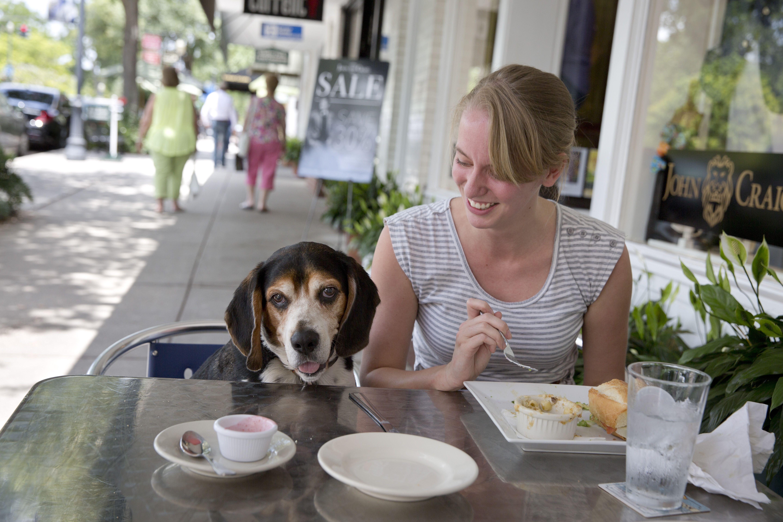 Dog Friendly Restaurants & Bars in Florida in 2020 Dog