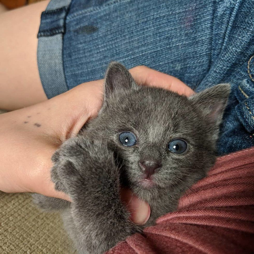 Kitten Found Crying for His Mom, Holds onto a Young
