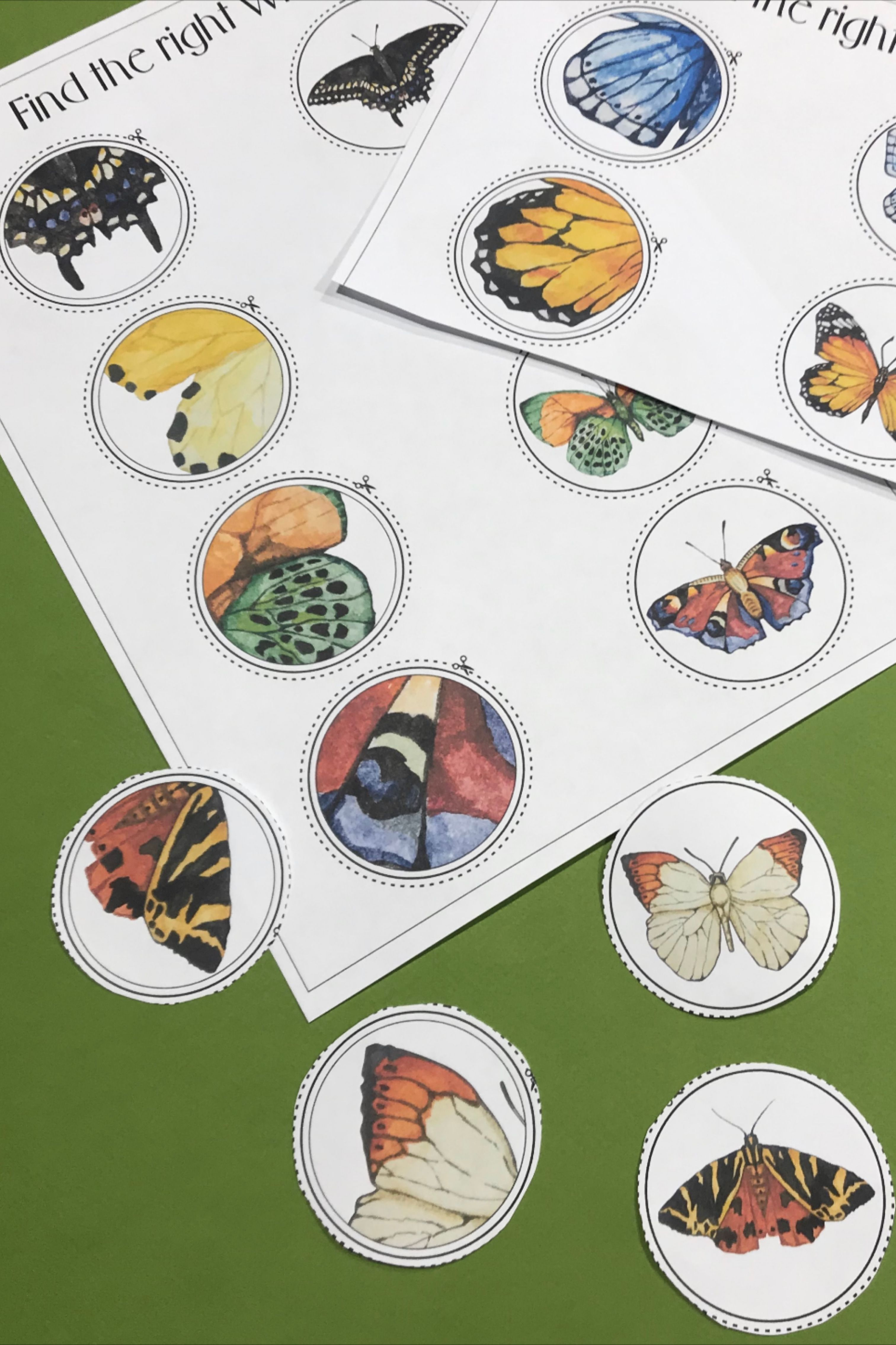 Butterfly Life Cycle Preschool Printables Curriculum