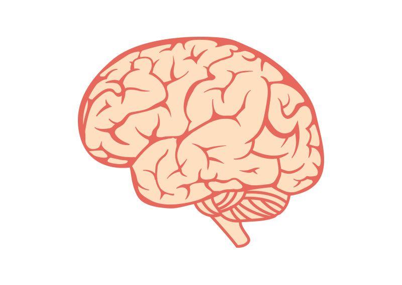 Brain Free Vector Illustration
