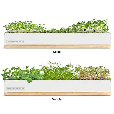 Windowsill Planter//Tiny Farm//Spices//Veggies