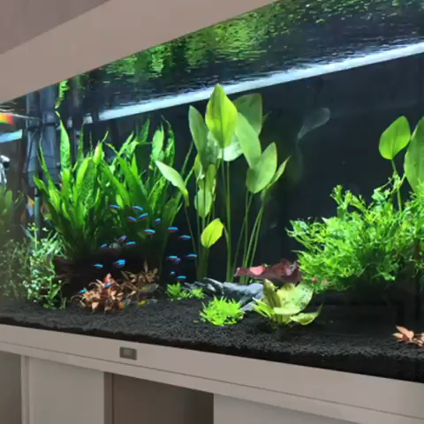 All Credit To My Aquarium Journey On Instagram As The Owner Of This Video Tropical Fish Aquarium Fresh Water Fish Tank Tropical Fish Tanks