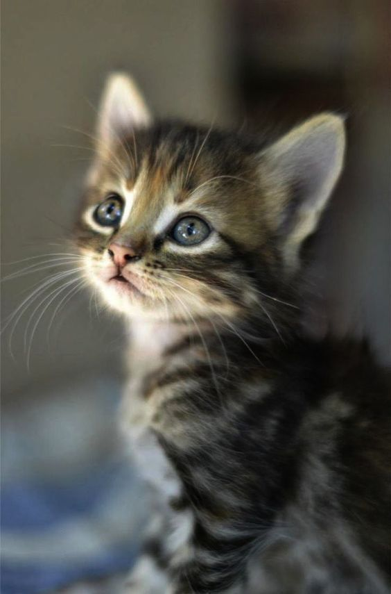 What A Cute Little Kitty Littlecat Tinycat Kitty Littlekitty Cute Animals