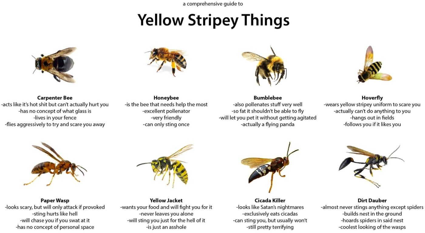 medium resolution of a comprehensive guide to yellow stripey things knowledge is powerbumblebee honey bee yellow jacket paper wasp what u0027s the difference i don u0027t