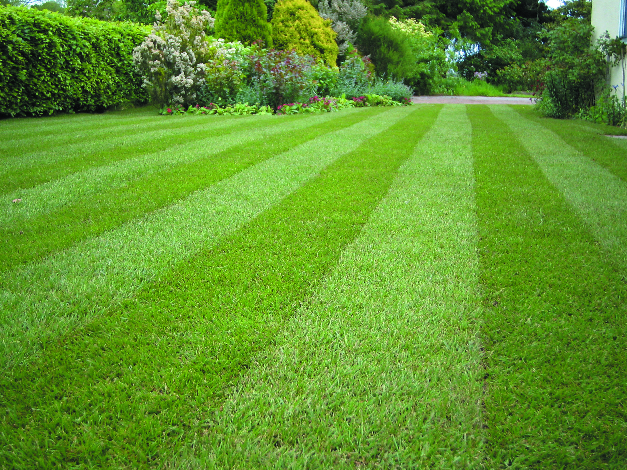A lawn created using the Green Velvet Water Saver Lawn