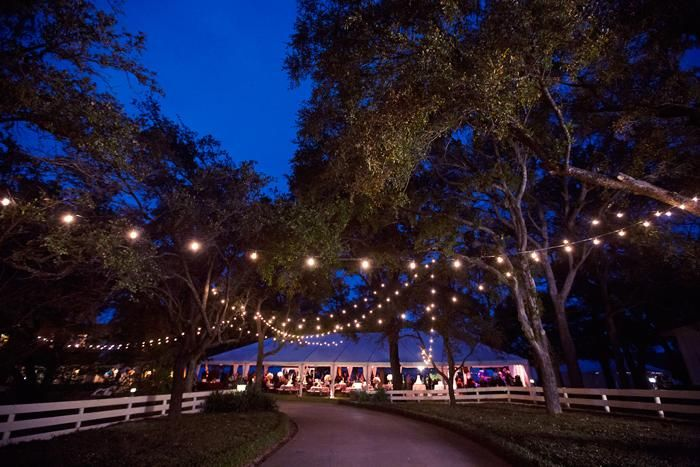 Good Explore Outdoor Tree Lighting, Lights In Trees, And More!