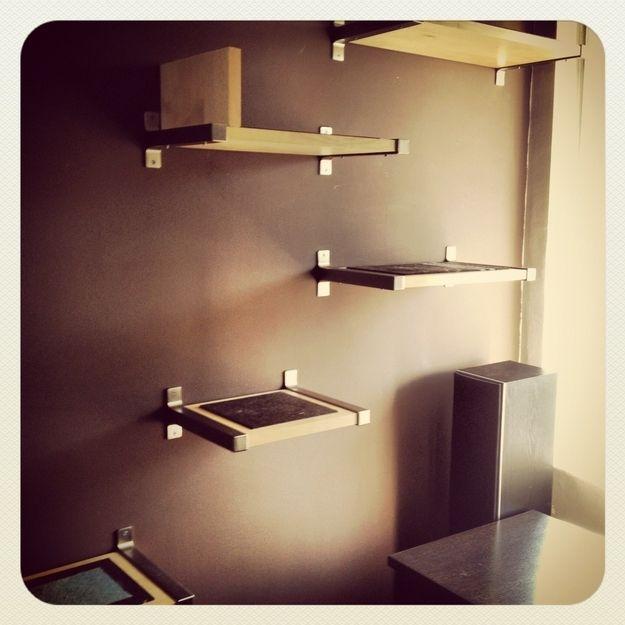 D.I.Y. Cat Shelves | Diy cat shelves, Cat wall shelves ...
