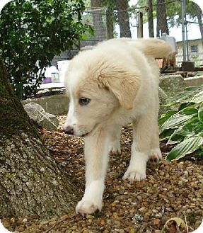 Pin By James Pearsall On Ideas For The House Golden Retriever