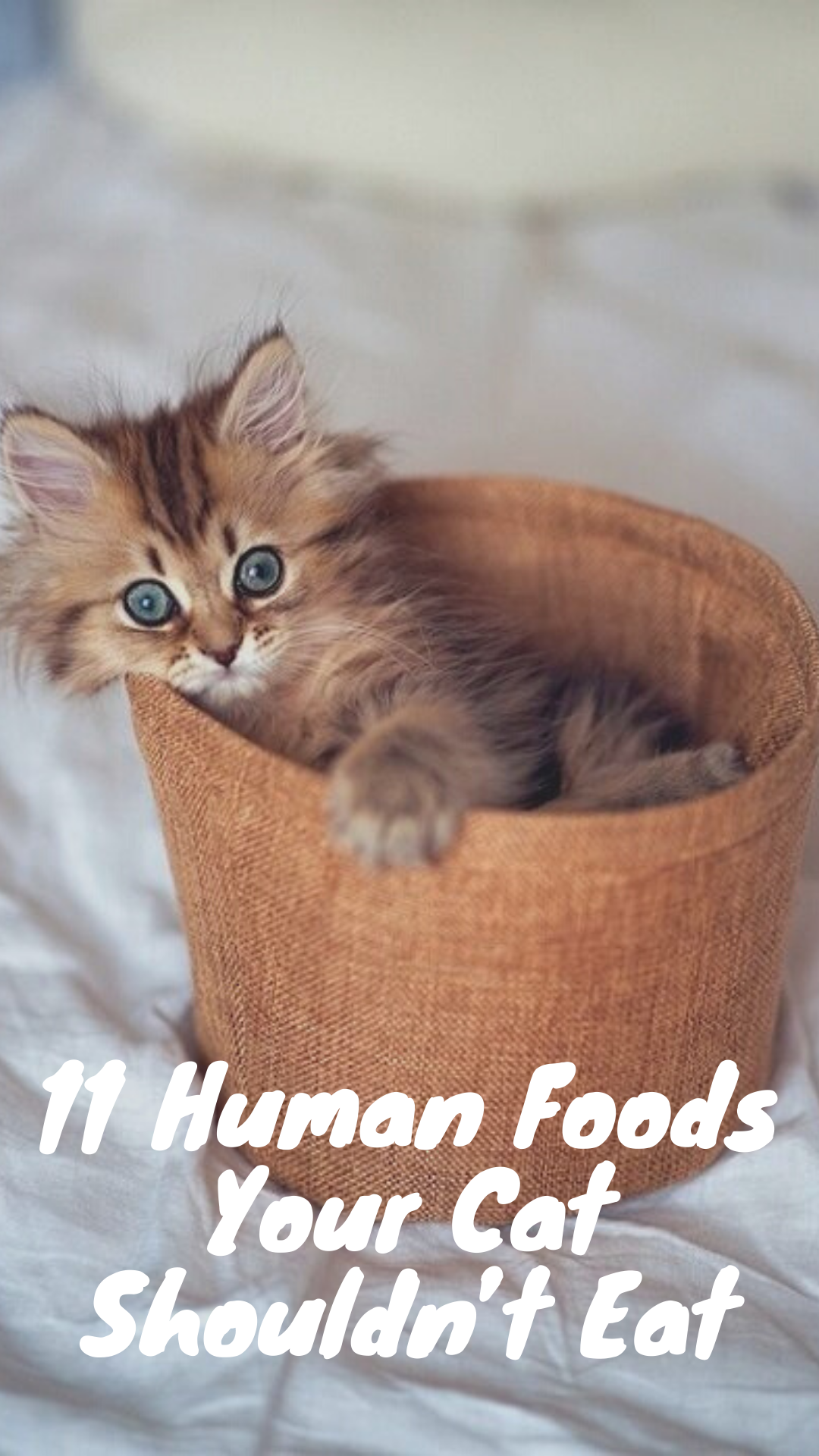 Learn Some Of The Most Common Foods That Can Be Harmful To Your Cat And Keep Your Cat From Eating Raw Bones As Well Cats Cat Facts Cats And Kittens