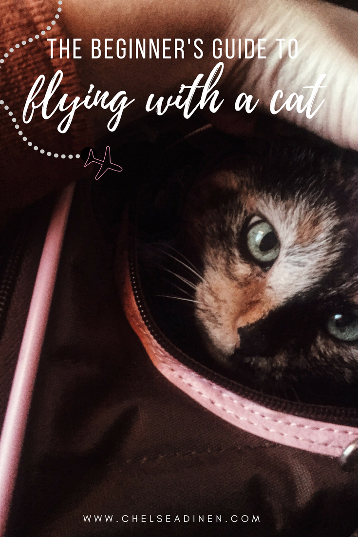 Flying with Your Cat Pet travel, Cats, Pets