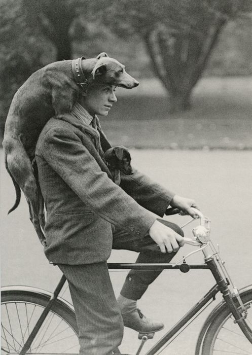 Along for the ride.... Vintage photo ~ dog with man on a bike.