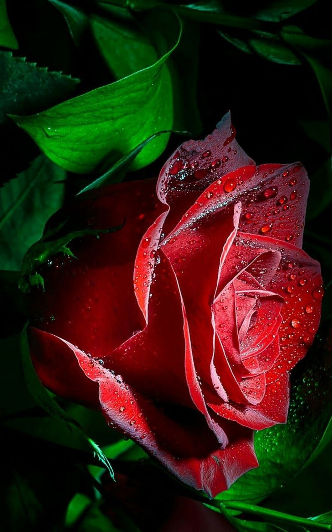 a red flower pinterest flowers beautiful flowers roses are red purple flowers pretty flowers very beautiful flowers beautiful izmirmasajfo