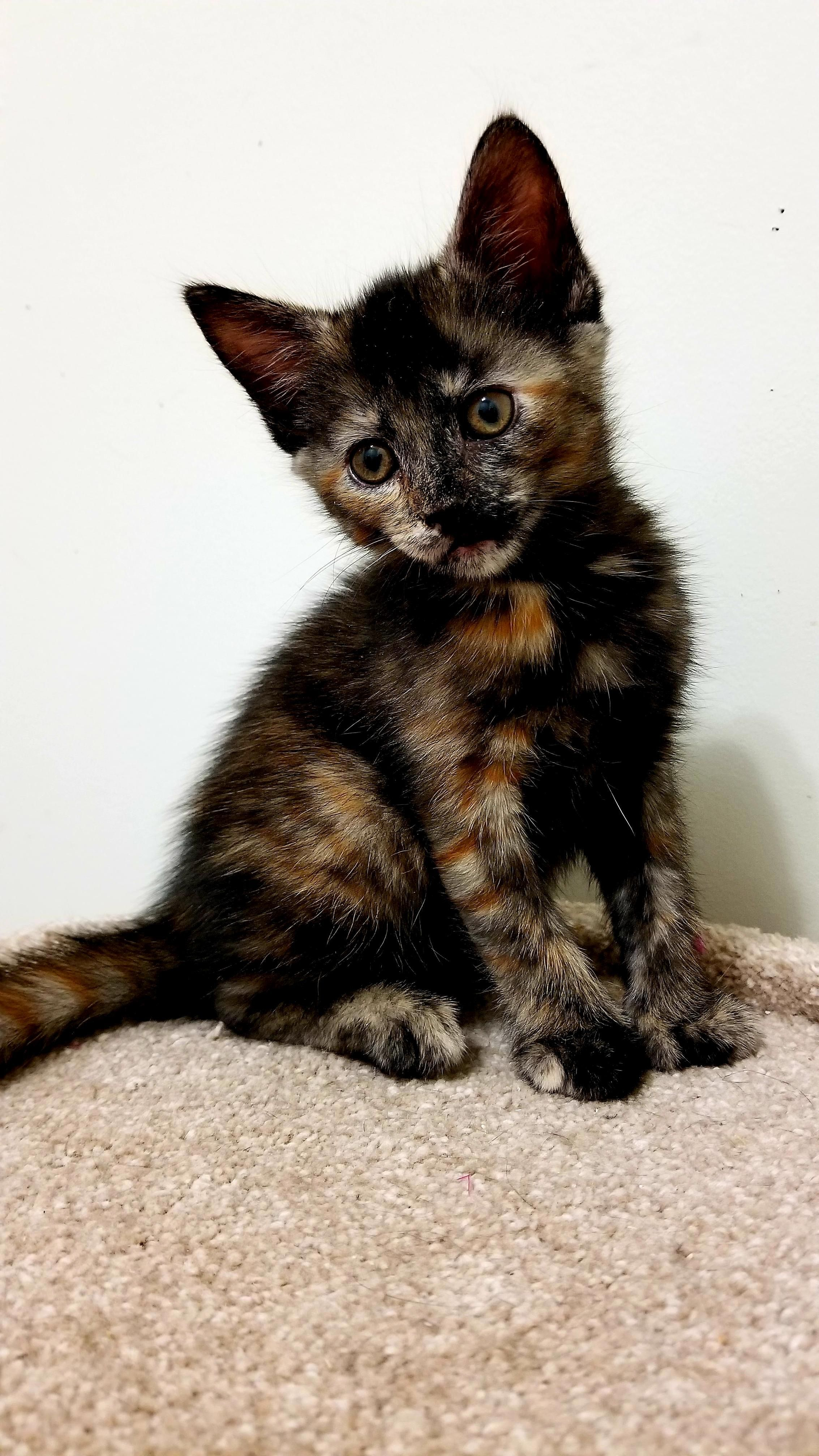 Betty The Tiny Princess Cat Cute Cats And Kittens Cute Cats Cats And Kittens